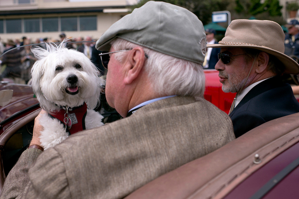 Description of . Jon Shirley, his friend Merritt Lutz and his dog Alfa are seen in Shirley's 1932 Alfa Romeo 8C 2300 Touring Spider Sunday, August 18th, 2013 at the Concours d'Elegance. (Matthew Hintz/Monterey County Herald)