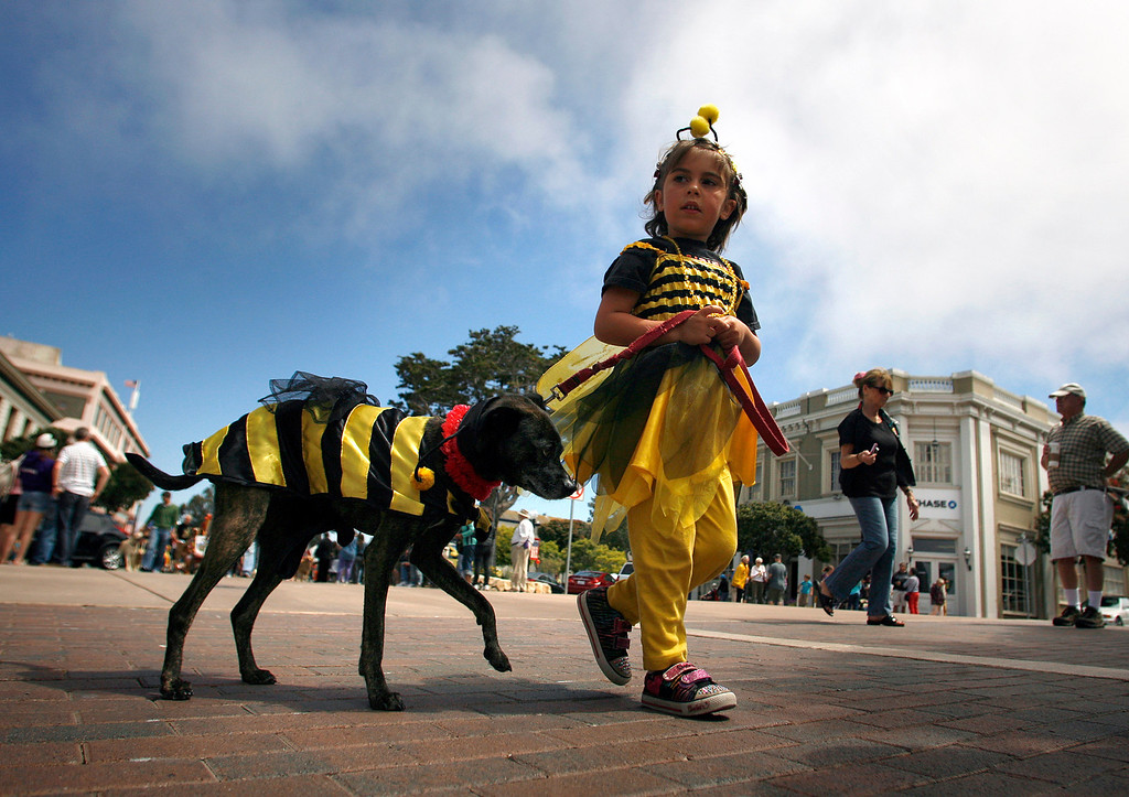 Description of . Malika Shihadeh, 4, and her dog Rocco, 10, dress in bee costumes during The Feast of Lanterns Pet Parade in downtown Pacific Grove, Calif. on Friday July 26, 2013.  (Photo David Royal/ Monterey County Herald)